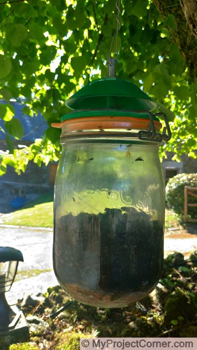 Storage jar fly trap filling up with flies