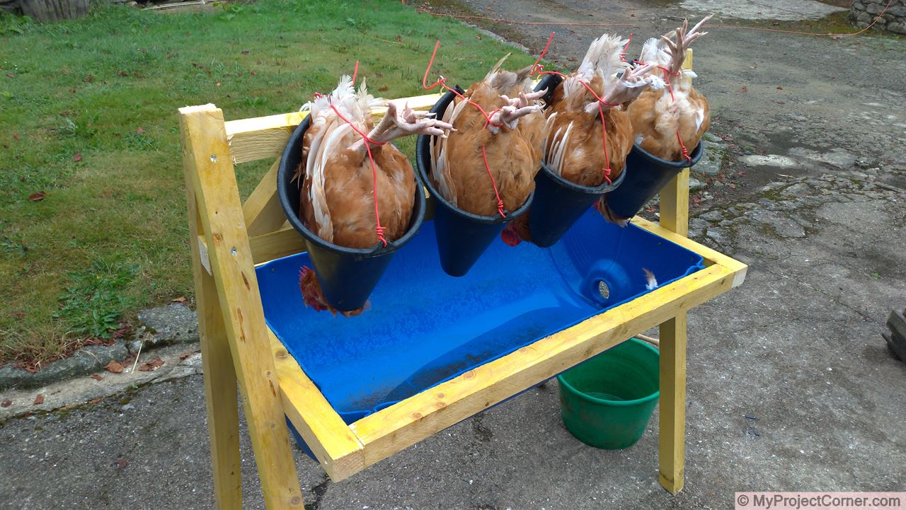 A homemade chicken slaughter station