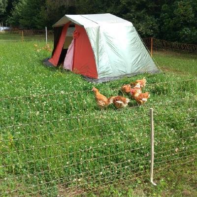 Alojamiento Alternativo Para Pollos