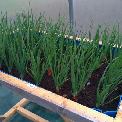 Planta reciclada para el invernadero