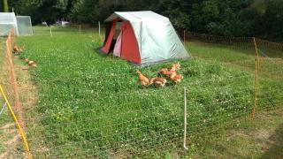 Abri alternatif pour les poulets