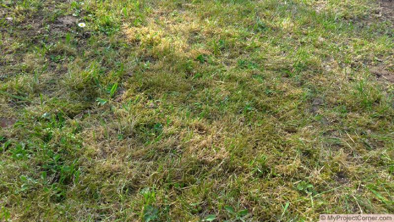 Lawn to be scarified